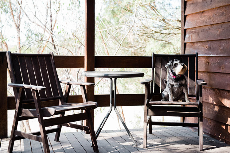 Dog sitting on deck chair of pet friendly cabin