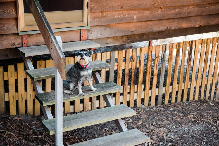 Enclosed yard in Pet Friendly Cabins